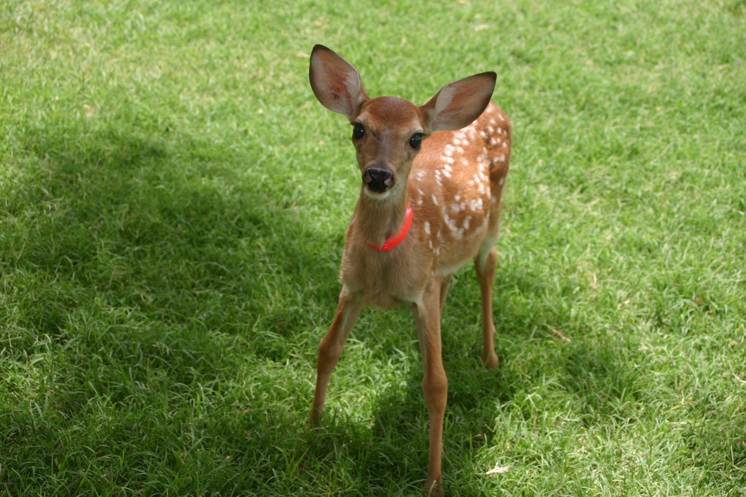 Baby Girl Deer Diaper Cake