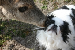 One of my best memories... the healing deer medicine of Daisy, her gift to Zoe.