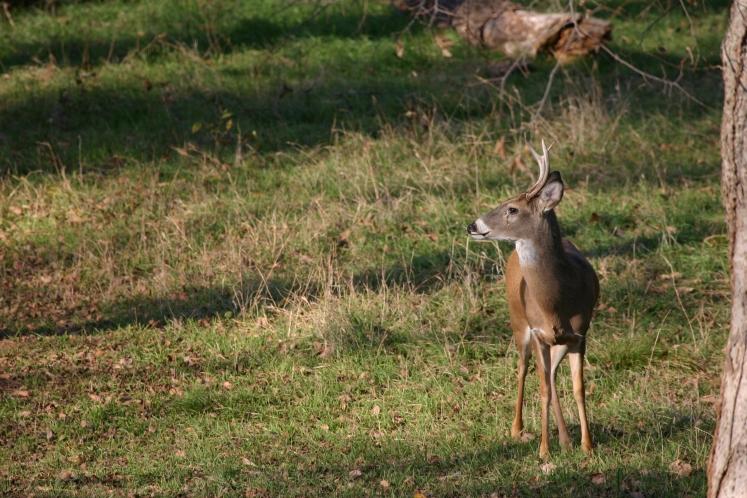 Deer Run Bed And Breakfast Texas
