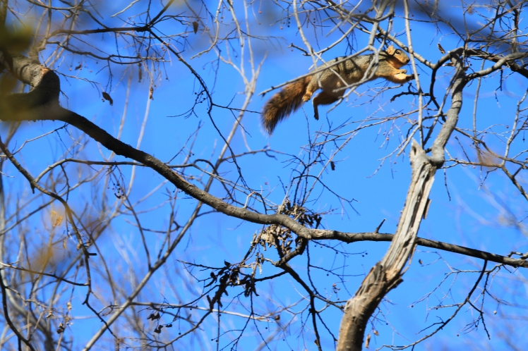 Squirrels are especially frisky and entertaining acrobats during the winter months.
