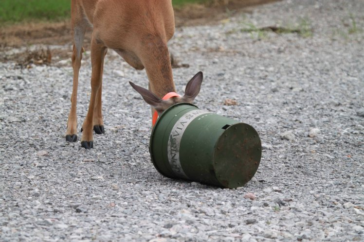 Hmm, better have a closer look, since buckets often contain corn or deer chow!