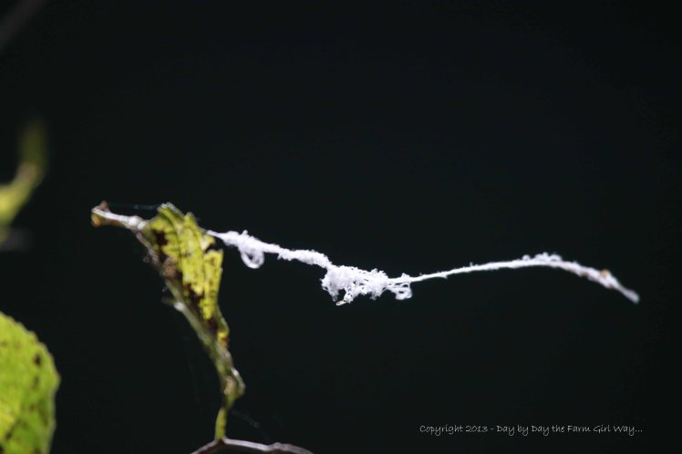 Caught on a single leaf, a tangle of gossamer floats lazily in a bit of warm breeze.