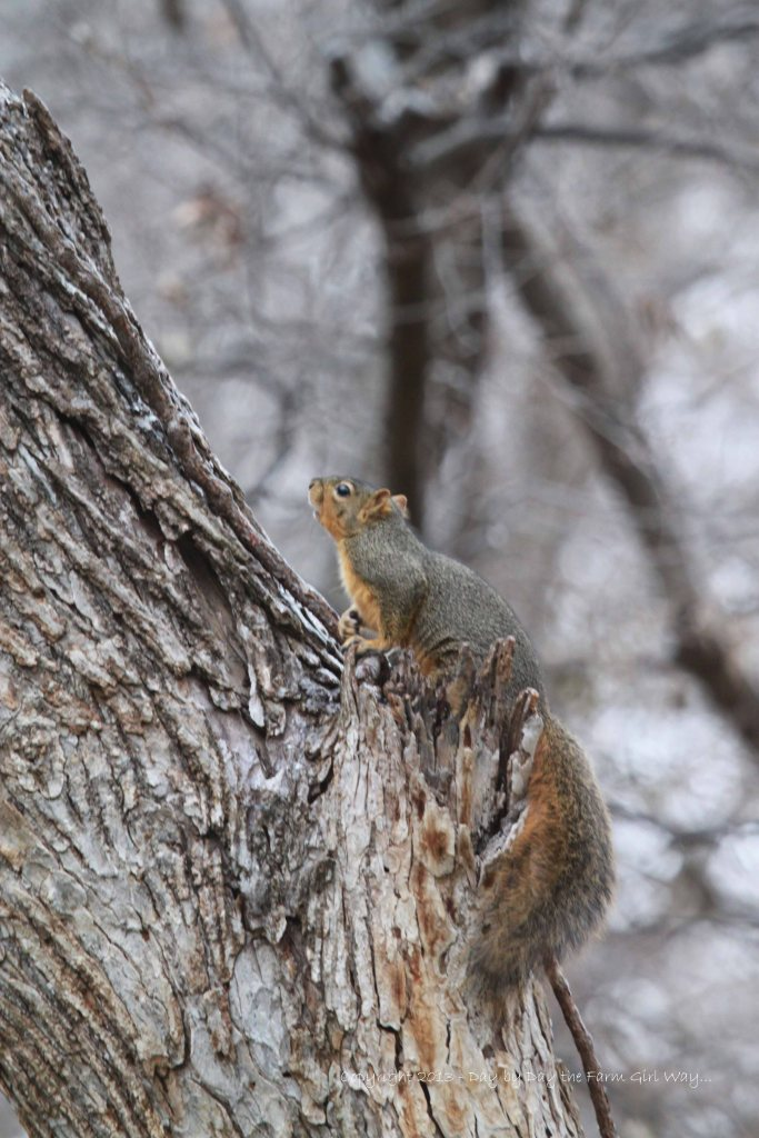 This adventurous squirrel had no trouble scampering around on the icy trees!