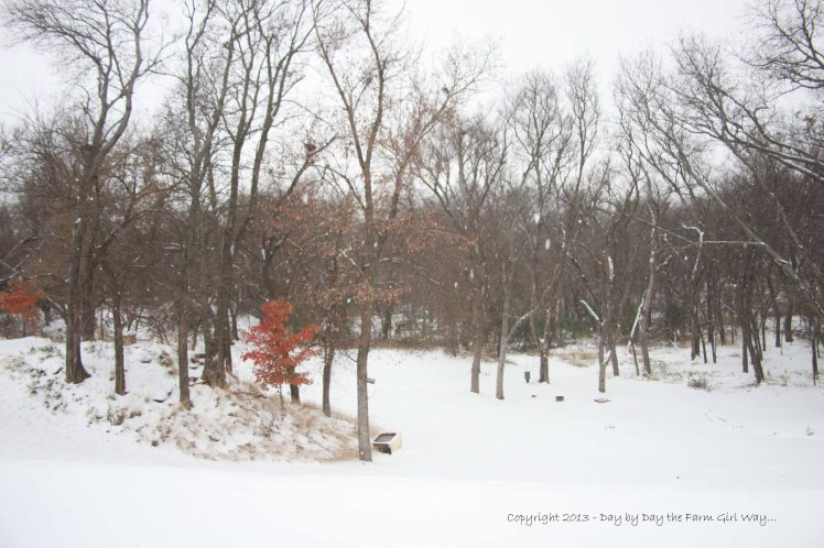 The wildlife feed and water area blanketed in early morning snow.