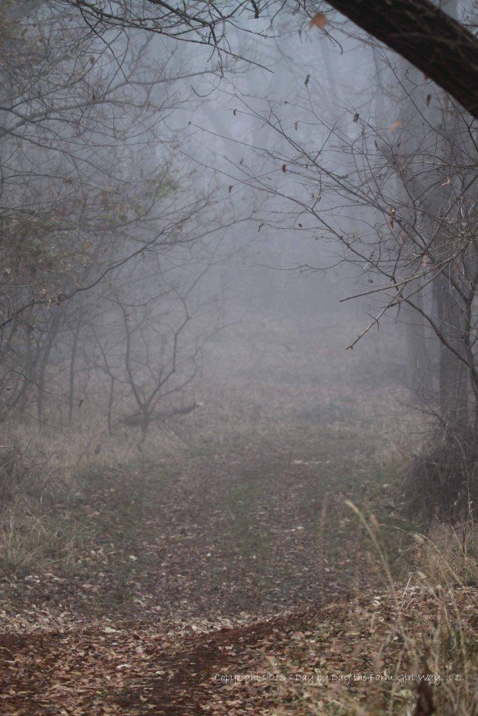 Woodland Path In Fog