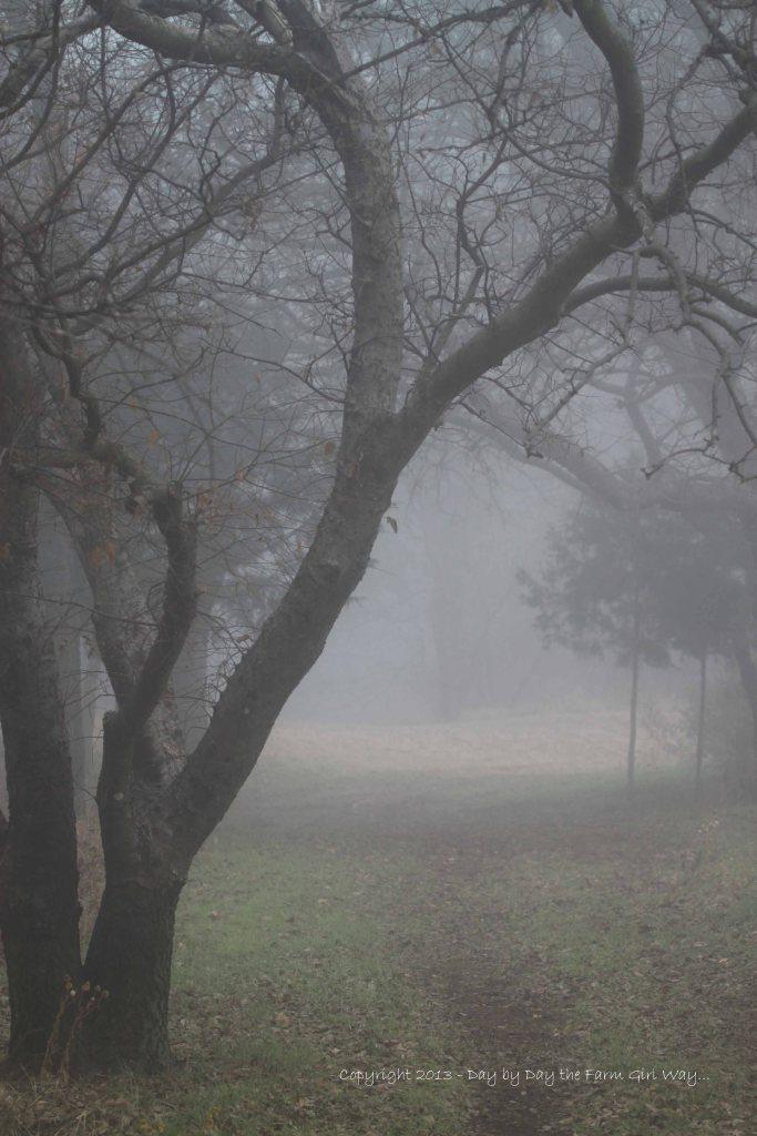 Foggy Path To Home