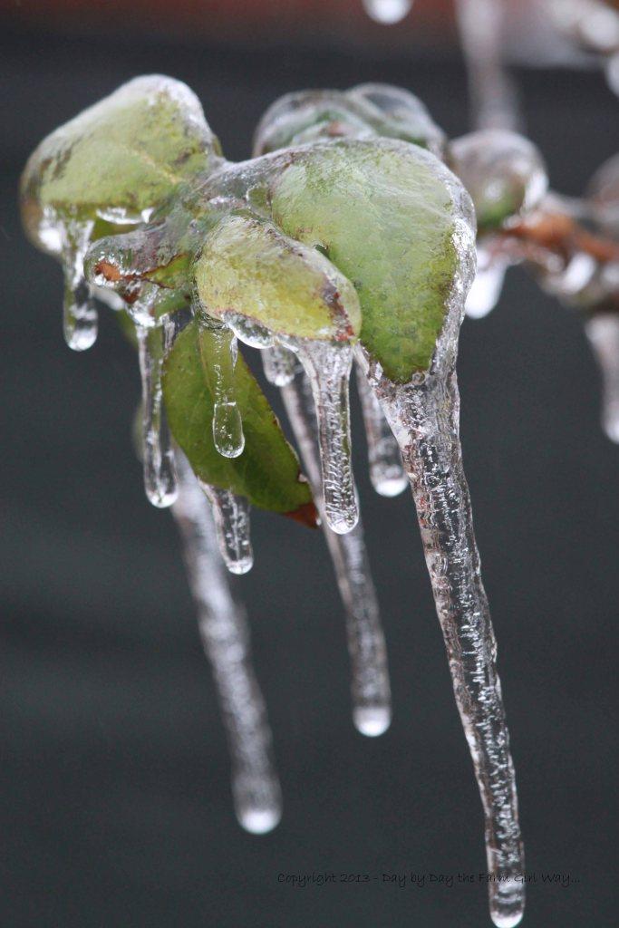 Long Frozen Fingers of Ice