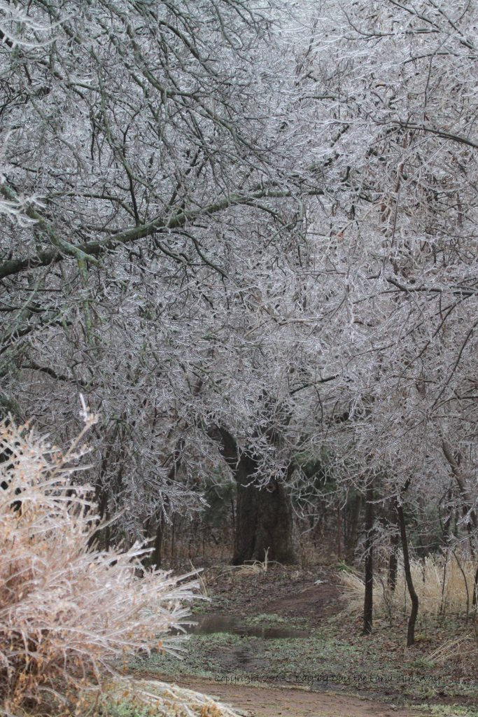 The canopy of limbs and branches lay low on the path into the woods.