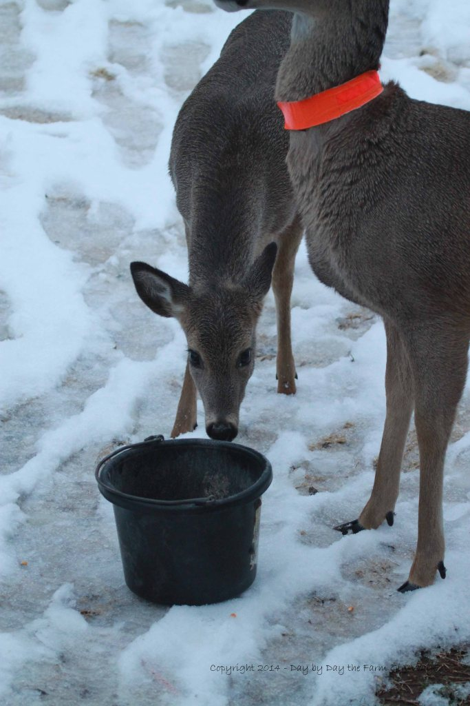 Spirit carefully checks out the bucket of kibbles!