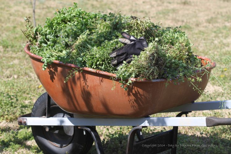 I made three trips with the wheelbarrow full of weeds!