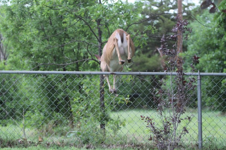 Daisy Jumps Fence_5034