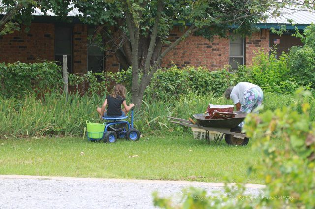 Great-grandma and Riley Jo working in the iris beds.