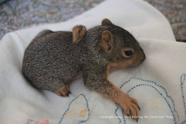 Those little claws are razor sharp! I love how he wears his tail all over the place!
