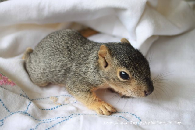 Punkin is not a fan of my camera. I had a terrible time getting photos.