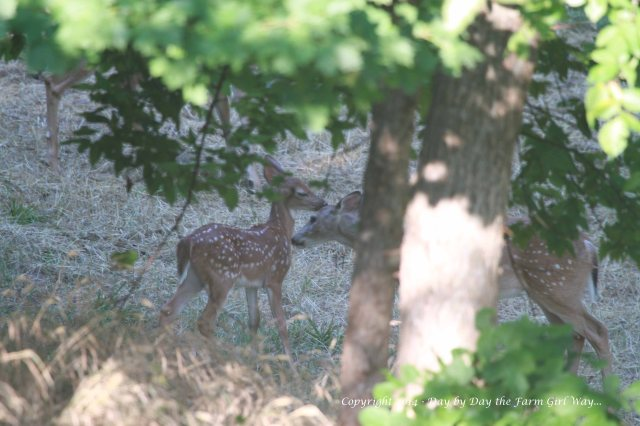 Heidi sniffs Willow.
