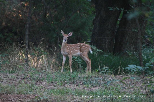 This is the only good photo I managed before Willow high-tailed it down the path after Spirit. Willow was very curious - this probably being the first time she has seen humans.