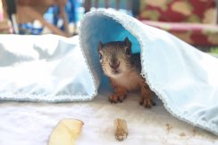 Baby squirrels need cover