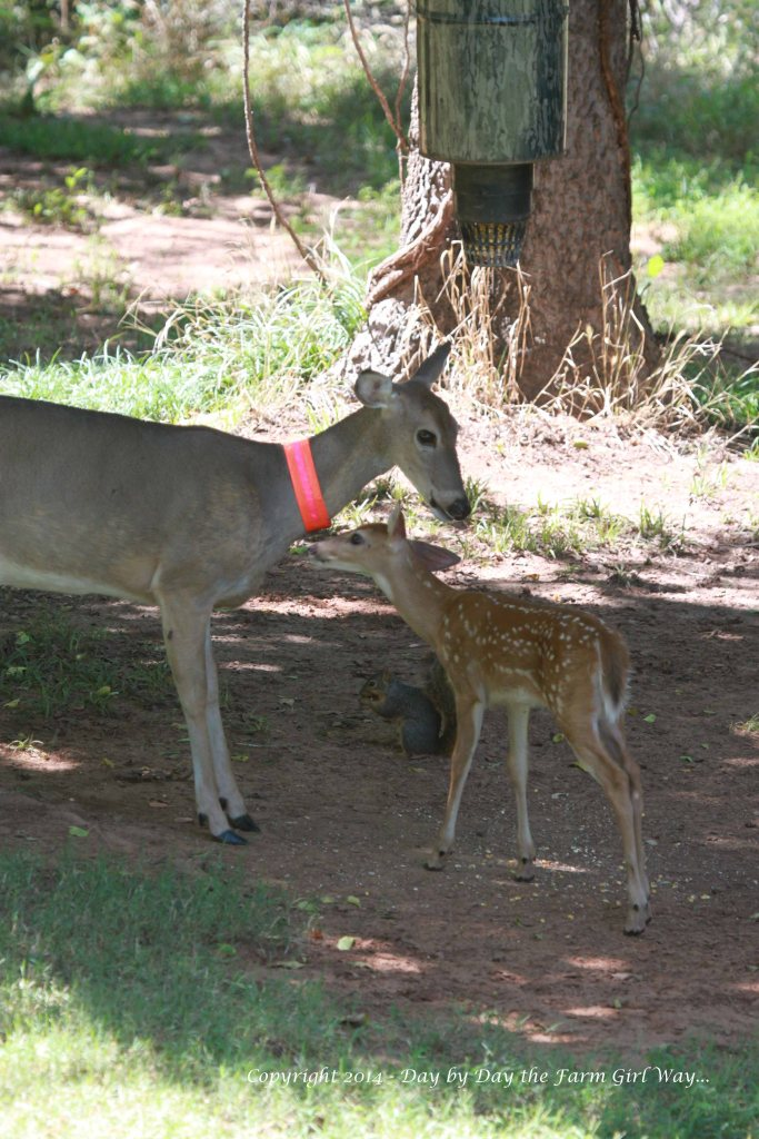 By October, it was common to see Willow with Daisy. Sometimes Daisy babysat while Spirit rested.