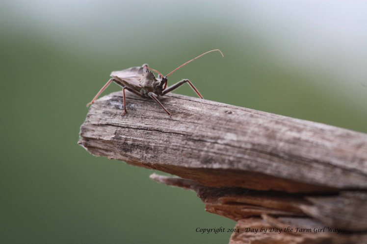 Soldier bugs are everywhere this year!