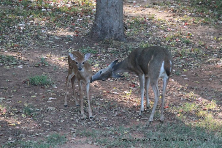 Spirit was often seen licking Willow's wound, keeping the area clean.