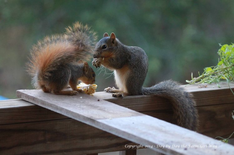Gambini and Punking enjoying a snack together in the evening sunset.