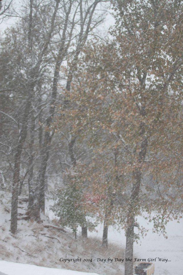 Winter 2014_8826