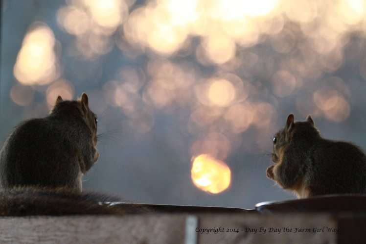 Punkin and Mr. Gambini nibble on sunflower seeds and pecans watching the sun set through the trees.