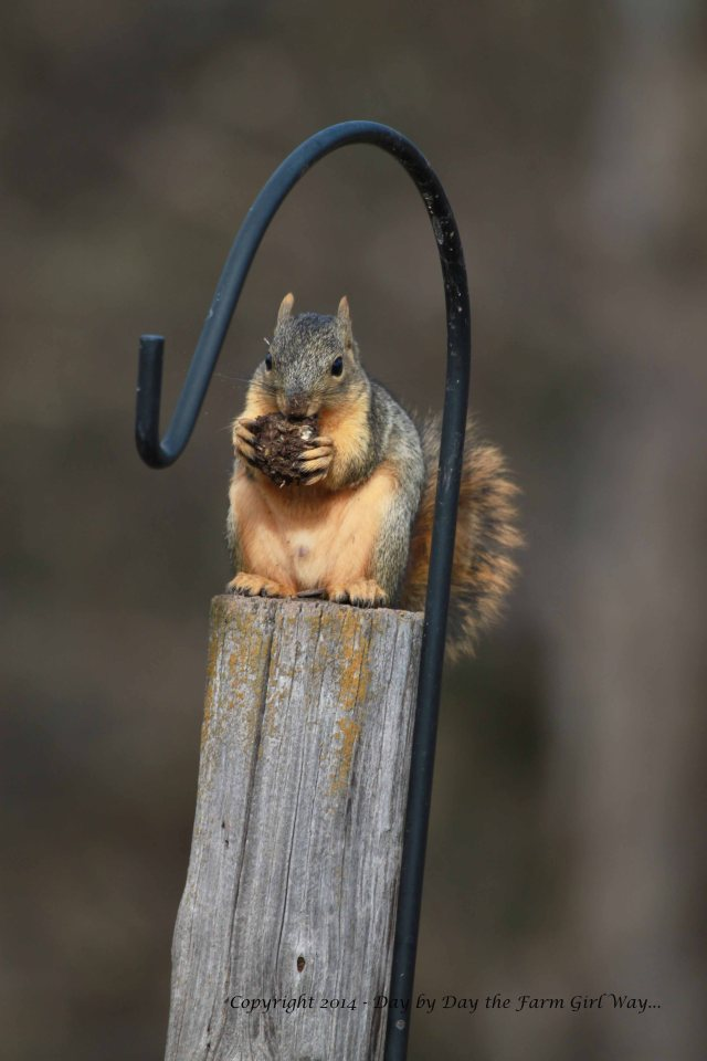 I was surprised to find that squirrels bury all sorts of food items for their winter cache.