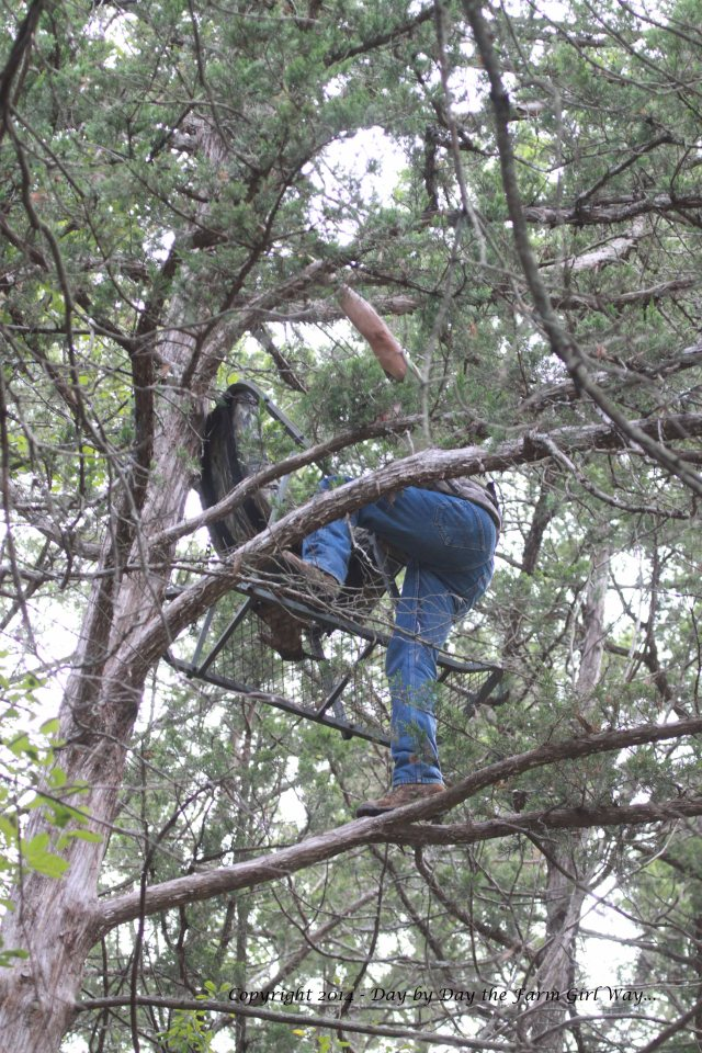 Twenty-five feet up in a cedar tree, FD secures his stand.