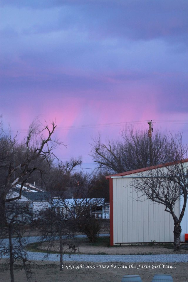 "Pink rain falling to the east, illuminated by the setting sun!  Notice another ""widow maker"" dead tree off to the left side. This scary-looking tree looms over FD's mom's garden area... another removal project we must attend to!"