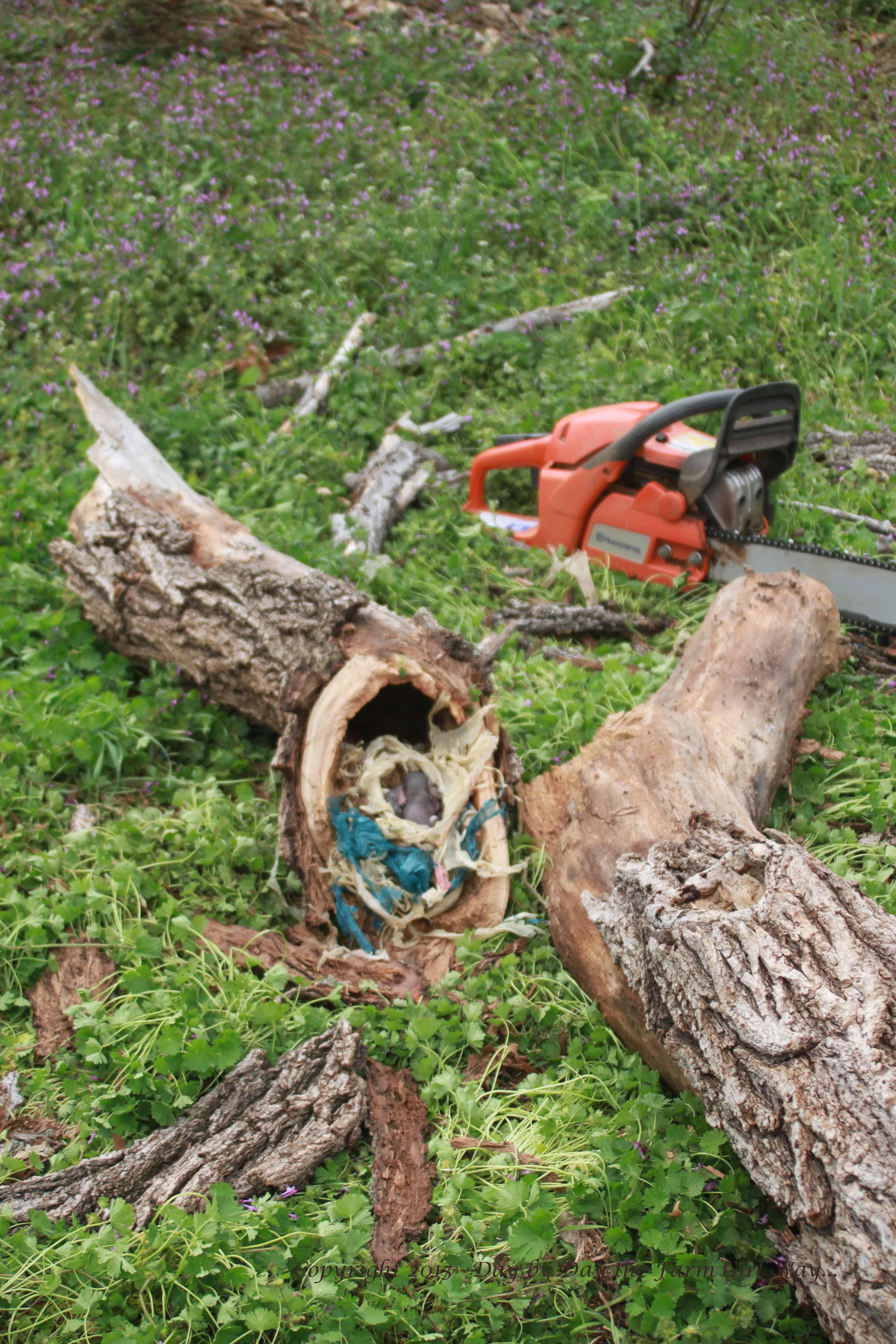 Taking Down A Widow-Maker – Day by Day the Farm Girl Way…