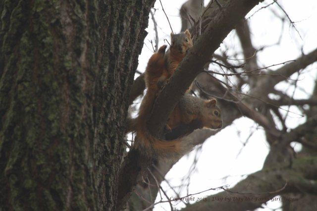 Squirrels_0089