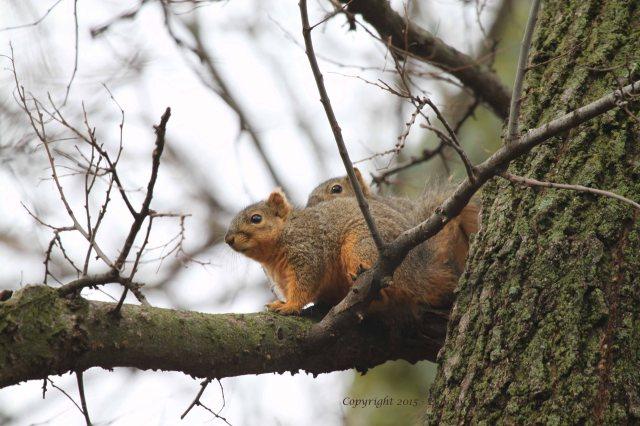 Squirrels Grooming_0094