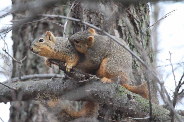 Squirrels Grooming_0102