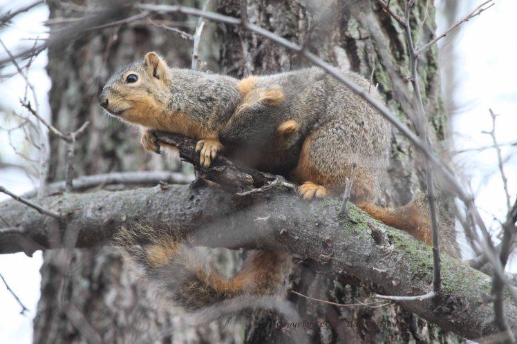 Squirrels Grooming_0103