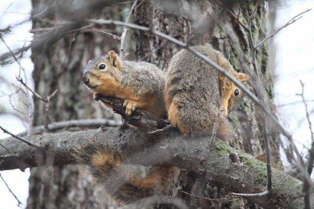 Squirrels Grooming_0106