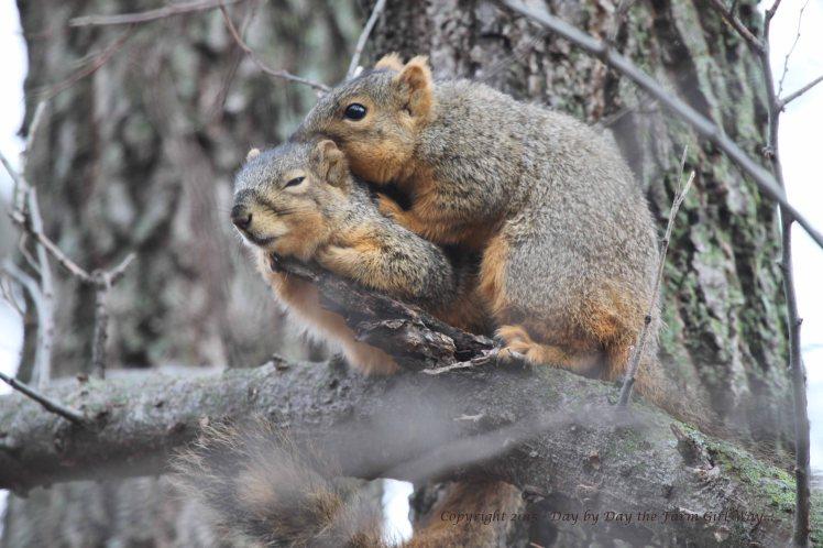Squirrels Grooming_0107