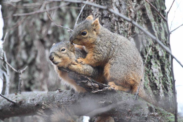 Squirrels Grooming_0108
