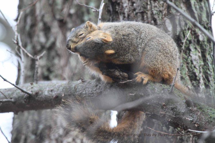 Squirrels Grooming_0112