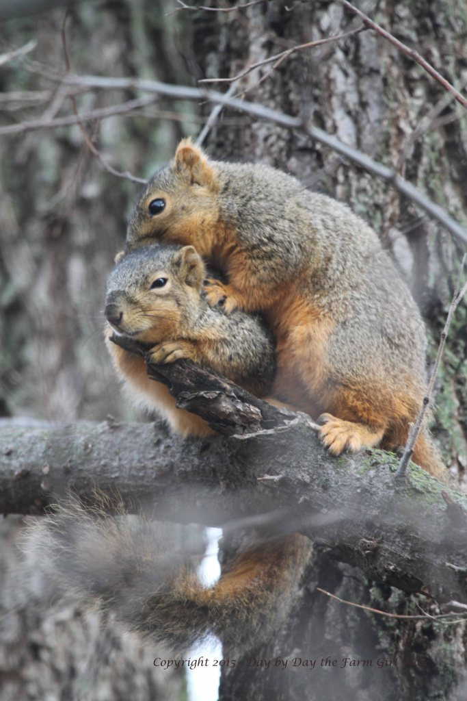 Mr. Gambini is the one with the fuzzy ears, who appears to be doing most of the grooming on Punkin.