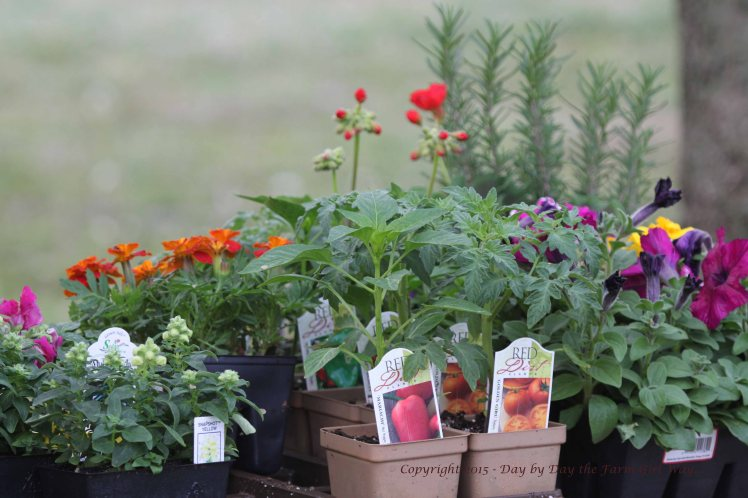 Hopefully this weekend I can get my annuals and a few herbs in the flower beds and planters around the house.