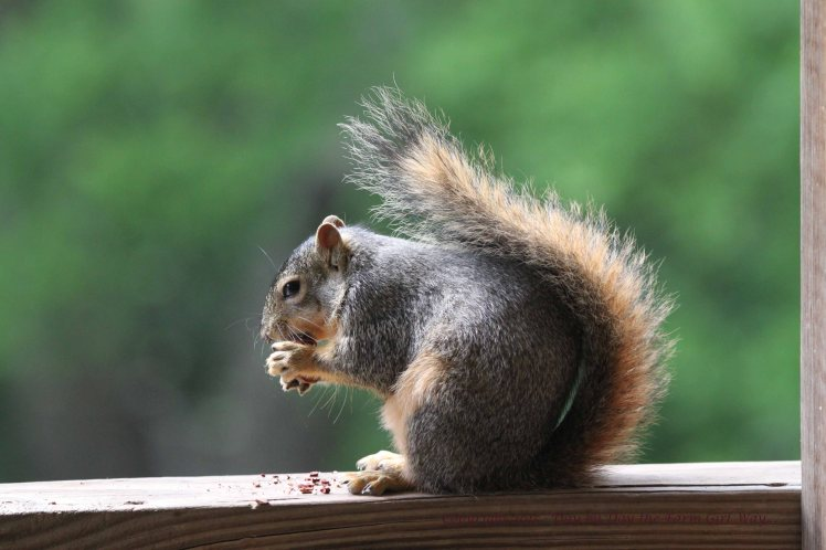 Punkin enjoys her daily pecan snack.