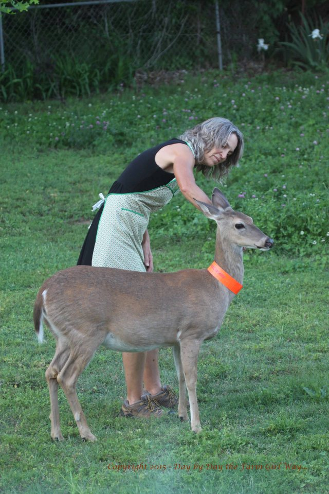Dinner dishes can wait! Daisy lets me pick ticks off of her head and neck, while she keeps watch. That's one of her clover patches in the background.