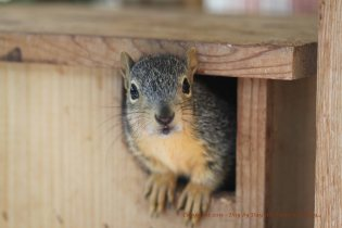 Raising Orphaned Squirrels