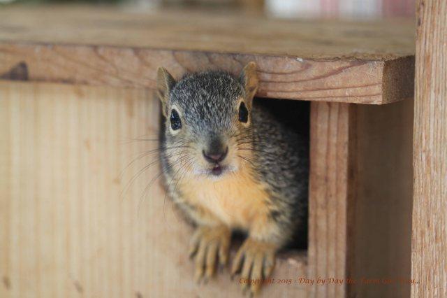 Juvenile Squirrel_0651