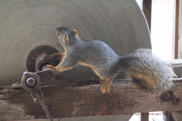Buddy checks out the old antique grinding wheel.