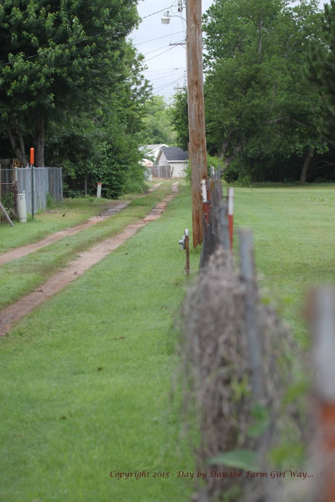 The same path along the ally fence indicated my friend came from a neighborhood to the west.