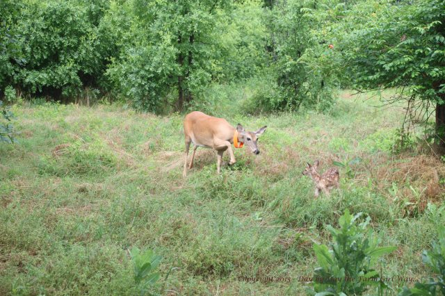 Daisy and Fawn_1349