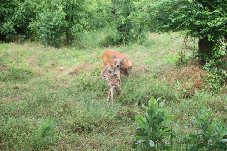 Daisy and Fawn_1352