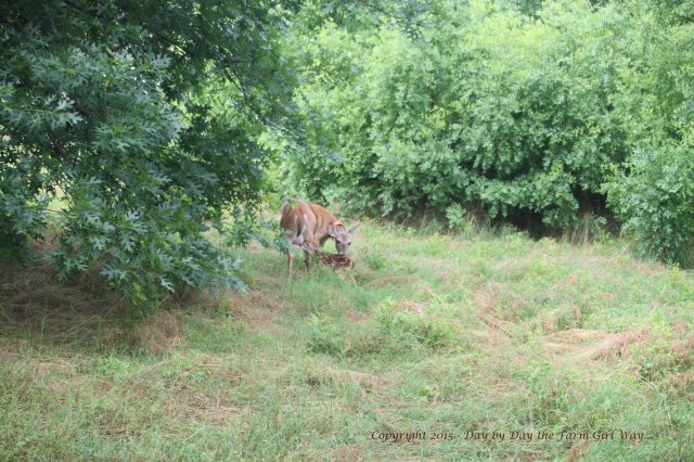 Daisy and Fawn_1360